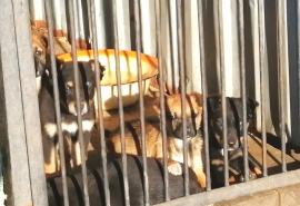 Директор омского приюта: «У нас перестали забирать собак»