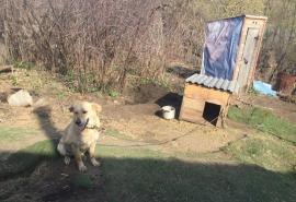 Омский приют для животных вынужден закрыться из-за плачевного положения и возможного голода