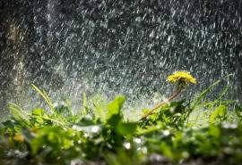 Синоптики пообещали теплые и дождливые выходные в Омске
