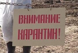 В двух районах Омской области ввели карантин из-за опасной вирусной инфекции