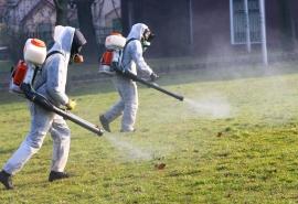 Омские власти рассказали об исходе массового истребления клещей в парках