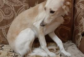В Омске пес Алмаз три дня просидел в колодце, пока его не спасла собака Сима