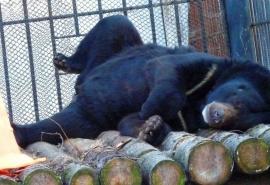 Омский медведь Кузя осваивает ремесло дизайнера