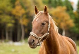 Омичка обогатилась после болезненной стычки с лошадью