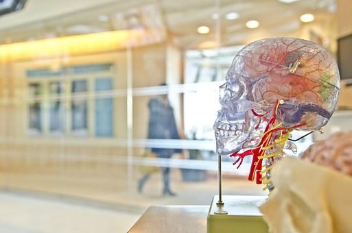 Ученые назвали способ, как улучшить память
