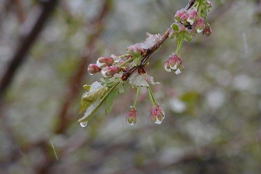 В Башкирии ожидаются заморозки до минус 5 градусов