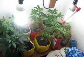 Омич объяснил 105 кустов наркосодержащих растений в подвале лечением спины