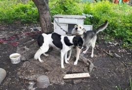 Собаки и щенки стали узниками Омска