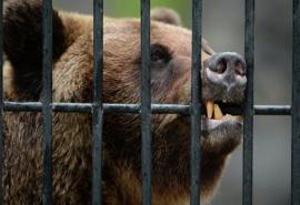 Врачи рассказали о тяжелом состоянии и множестве травм омича, которому медведь откусил руку