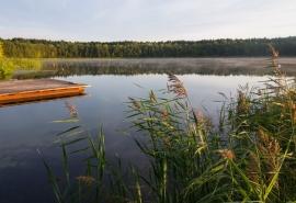 Рекреационная жемчужина Омской области превратилась в трупное озеро