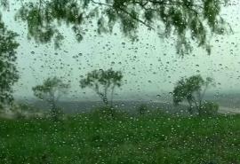 Лето в Омской области начнется с дождей и гроз