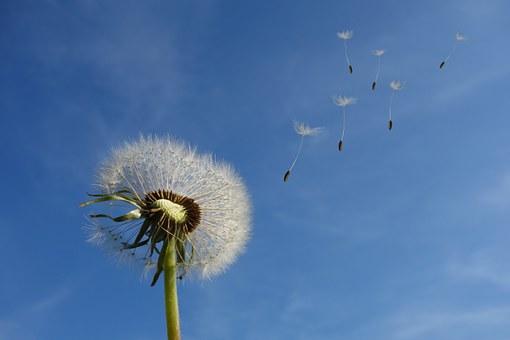 В Башкирии ожидается сильный ветер