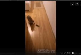 Омичка пожаловалась на летучих мышей, прогрызающих москитные сетки и влетающих в квартиру