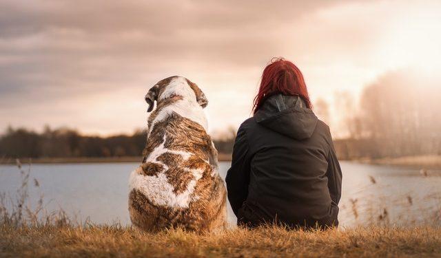 Ученые доказали, что собаки перенимают настроение хозяев
