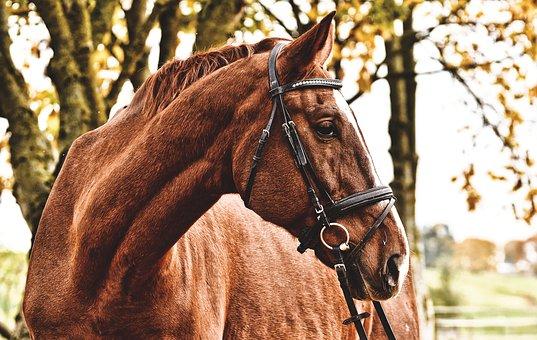 На Сабантуе в Башкирии лошадь совершила наезд на человека