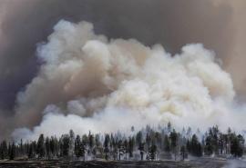 Из-за лесных пожаров омский воздух стал опасным для здоровья