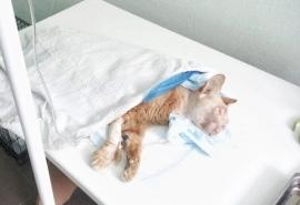 Умирающий кот Рыжик получил крошечный шанс на спасение, но все же погиб в муках по вине омичей
