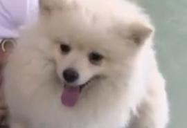 Омский первоклассник в одиночку вычислил возможного похитителя дорогостоящей собаки своего друга