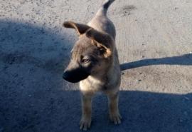 Новый напарник омского пса-спасателя Мишани оказался игривой девчонкой