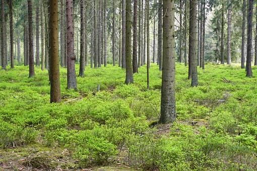 В Башкирии в лесу заблудился мужчина, собиравший ягоды