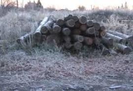 Масштабное уничтожение леса на севере Омской области покажут на немецком телевидении
