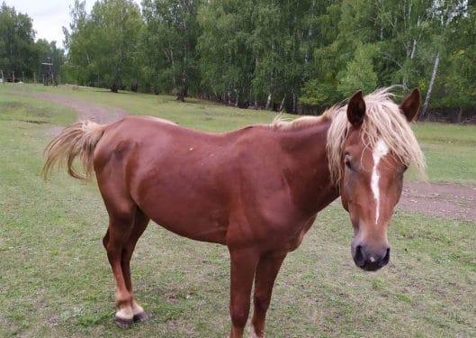 В Башкирии мужчина украл двух лошадей