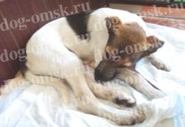 Омский щенок Пуговка с перемолотыми костями выбрала борьбу за жизнь и здоровье