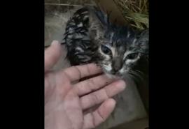 В Омске котенка жестоко избили до разрыва брюшка и выкинули умирать под ливень