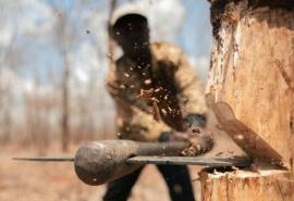 Омича, вырубившего восемь деревьев ради парковки, жестко наказали