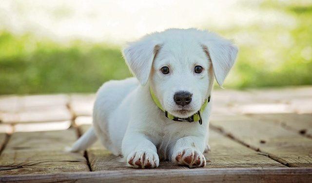 Почему у собак всегда влажный нос