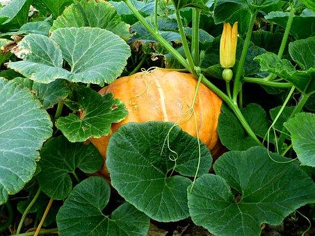 Назван овощ с омолаживающими свойствами