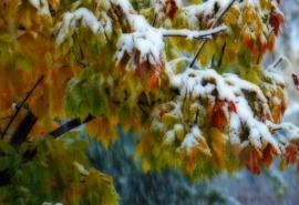 В Омской области назвали даты сентябрьских снегопадов