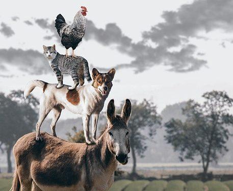 Смешные факты о животных, подборка дня 18 сентября
