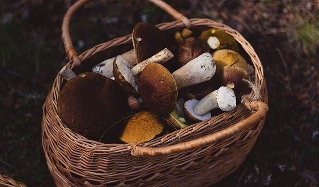 В Башкирии семеро отравились пирогом с грибами, из них трое детей