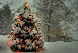Омские лесники намерены спасать елочки от вырубки к Новому году
