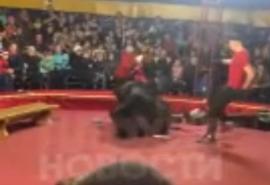 Огромный медведь бросился грызть горло дрессировщика в цирке-шапито