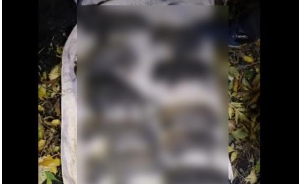 В Башкирии прокуратура начала проверку из-за массовой гибели щенков