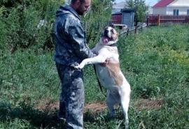 Победившая рак собака Дино, спасенная из ледяной омской дачи, где у нее на глазах насмерть замерзли щенки, ...