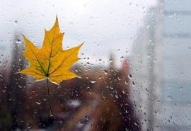 Дожди придут в Омскую область уже на днях