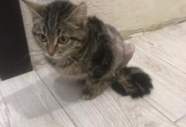 Сильная духом кошечка Вита за несколько недель вынесла 5 операций и намерена победить недуг с помощью омички
