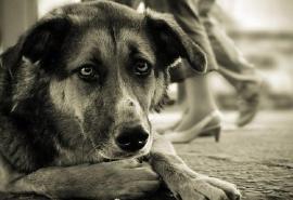 Омские чиновники хотят обязать себя умерщвлять животных