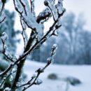 Синоптики рассказали, какой погодой закончится зима в Омской области