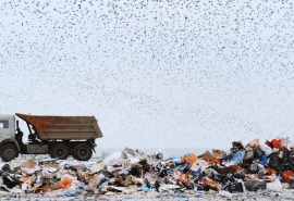 На омском мусорном полигоне задавали женщину