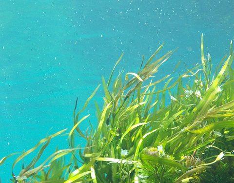 В Китае нашли зеленую водоросль возрастом в миллиард лет