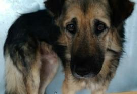 В Омске робеет и голодает грустный пес, который никогда не улыбается