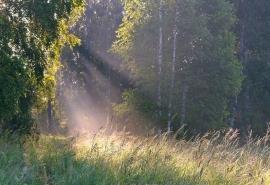 На севере Омской области определят стоимость лесов