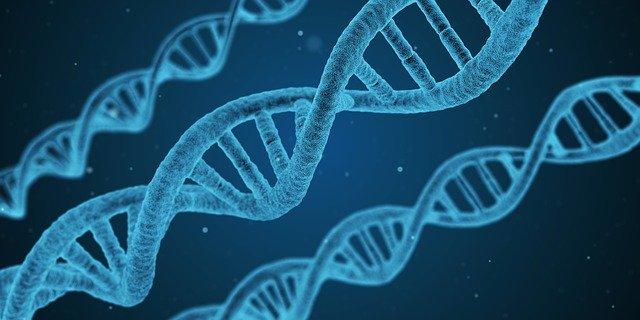 Стало возможным редактировать сразу несколько фрагментов генома