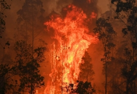 Стало известно, где и когда в Омской области могут вспыхнуть лесные пожары в 2020 году
