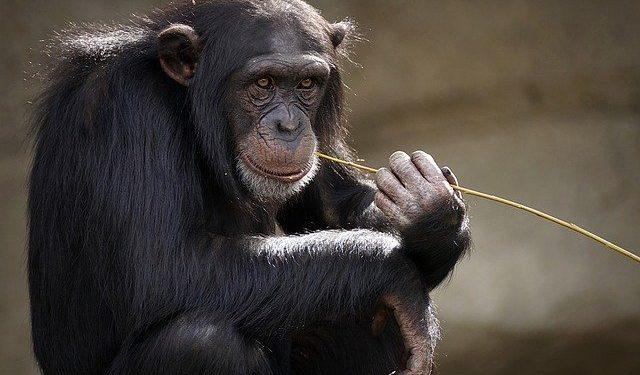 Приматы имели способность к речи 25 миллионов лет назад — ученые