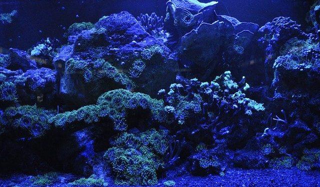 В рифах Австралии сняли на видео самое длинное в мире существо
